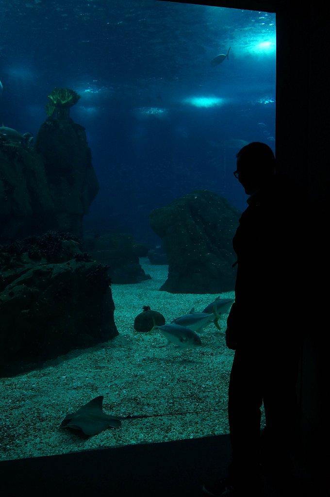 Oceanarium, Lisbonne