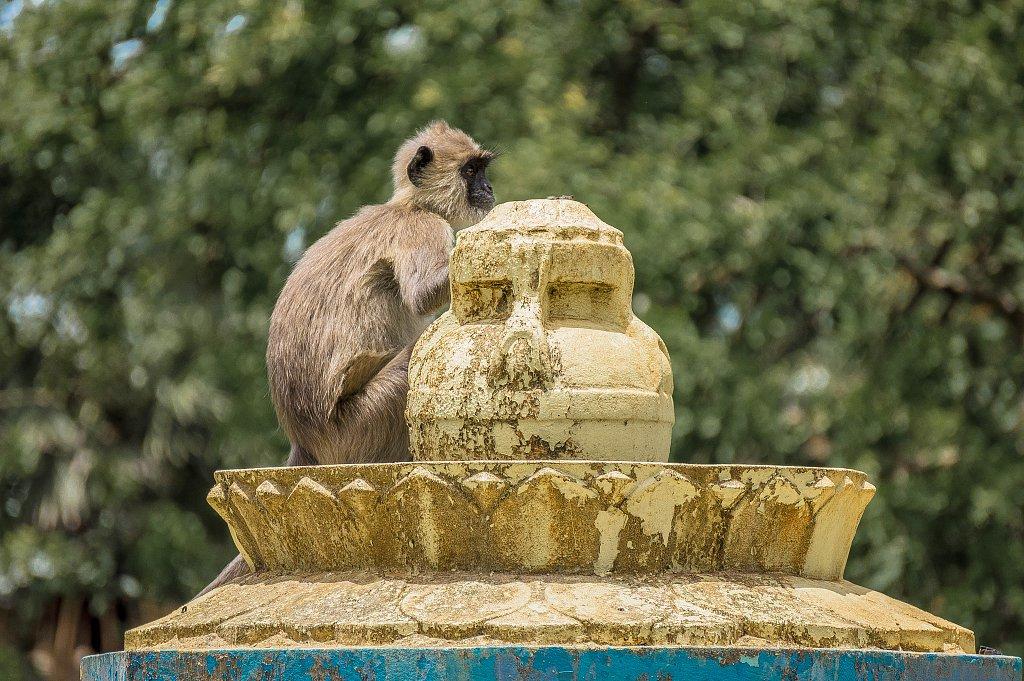 Mihintale - monkey