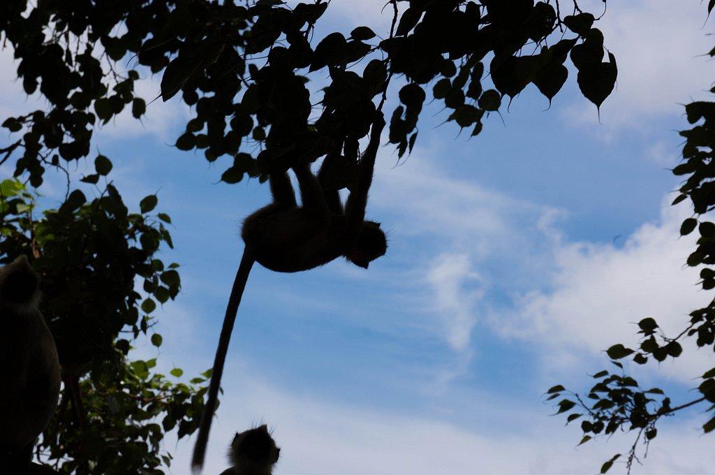Anuradhapura - Sri Maha Bodhi monkeys