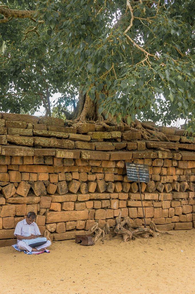 Anuradhapura - Sri Maha Bodhi meditation