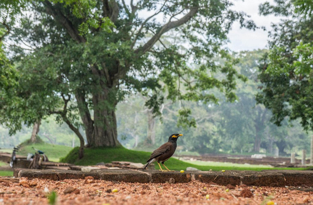 Anuradhapura ancient city - bird