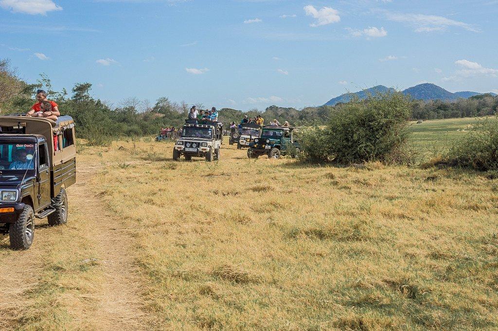 Minneriya national park -  jeeps and tourists