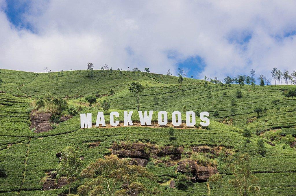 On the road to Haputale - Bookellie Macwoods tea plantations