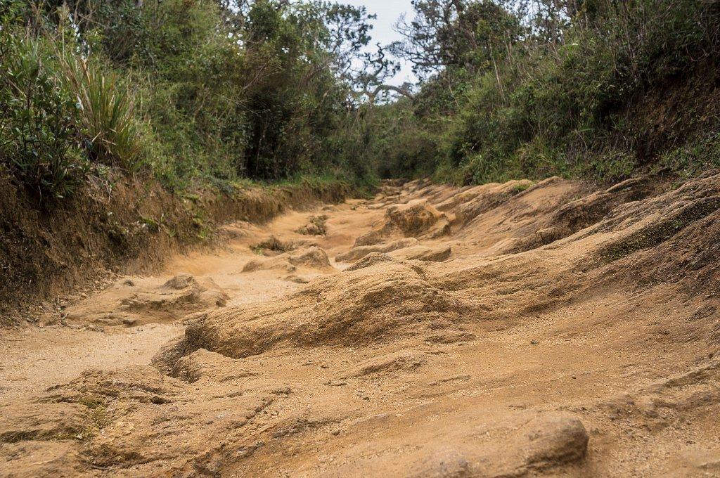 Horton Plains - rock path