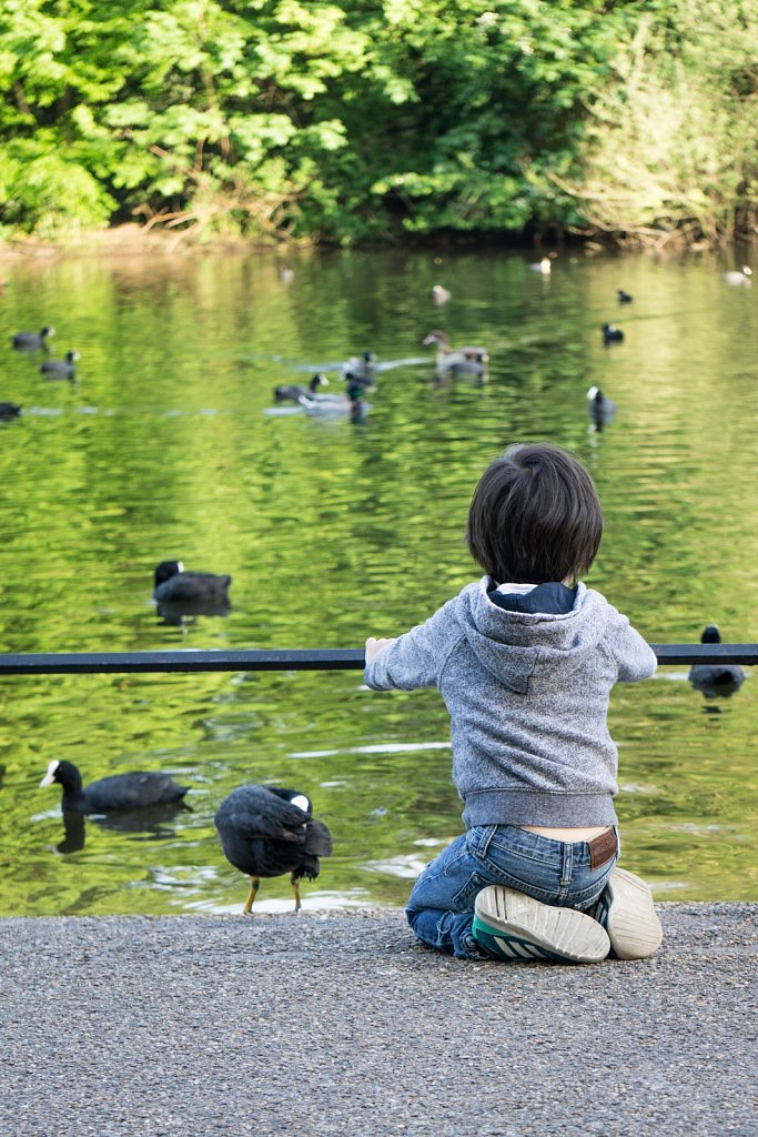 Canards, Hyde Park, Londres